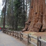 Top 10 Amazing National Parks In California To Visit